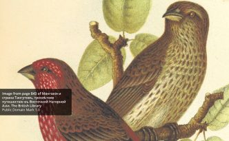 This image is from a selection of images that have either been tagged as being natural history content, or are taken from books concerning natural history.